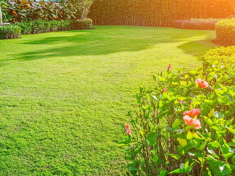 Clean the Surrounding garden Area