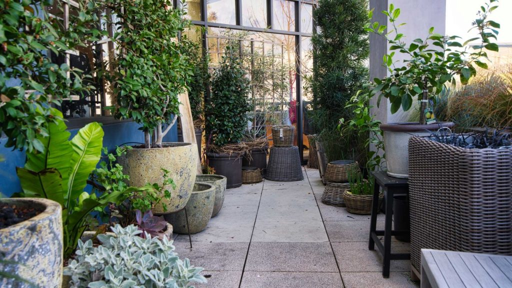 Buy New Plants and Pots For Your Garden